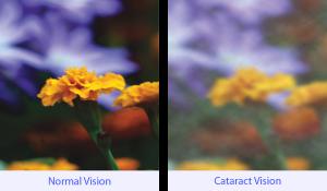 Cat_vision